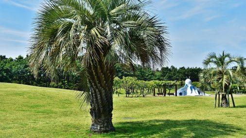 辻堂海浜公園の写真